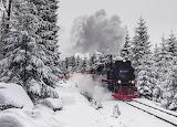 Train In Winter Forest