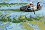 #Fishermen Rowing Boat on Algae-Filled Chaohu Lake, China