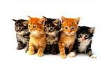 Cute-Kittens-kittens-16094703-1280-800