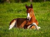 Baby Horse...