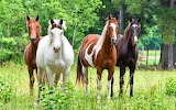 Horses, forest, animals, grass, trees, nature, stallion, beautif