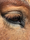 Dennis' eye
