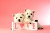 Love buds
