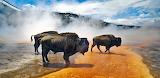 Buffalo Bathtub