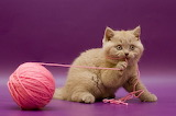 kitten-with-yarn