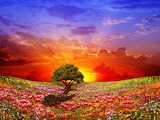 Colours-colorful-sunset-tree-flowers-fields-landscape-Thumb