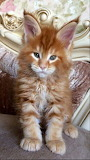 Marmalade Kitty