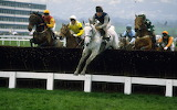 Desert Orchid and Simon Sherwood 1989 Gold Cup