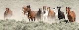 Wild Horses (11)