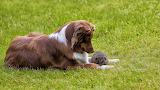 Pies z jeżem