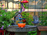 A Territorial Dispute between Grey Catbird & American Robin