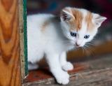 Exploring kitten