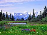 Alpine Wildflowers, Rocky Mountains, British Columbia...