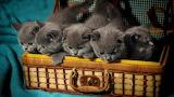 ☺♥ Five cuties...
