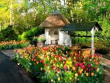 Netherlands Parks Tulips Keukenhof Water well 520476 1365x1024