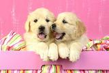 Little cuties
