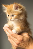 Cute Orange Striped Kitten