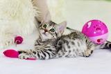 Kitten & pink mouse
