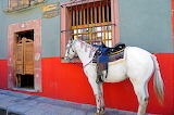 Horse outside bar saloon in Mexico