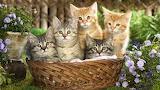 Basket of cute