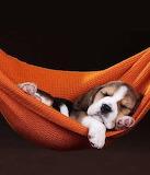Asleep in hammock