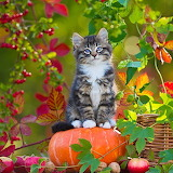 Kitten & Pumpkin...