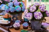 Lovely Flower Cupcakes
