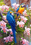 Parrots and Orchids~