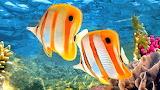 150 Peixos - Fish