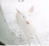 I love St. Ignace- Beau Soleil Langlois Albino