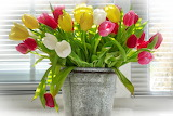 ^ Tulips in tin bucket