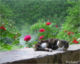 Glorious Spring...