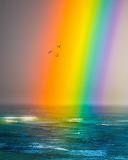 HUGE Rainbow
