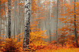 Welcome to Orange Forest-Evgeni Dinev