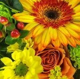 ^ Sunshine Bouquet Flowers