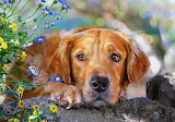 Cute sad dog