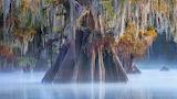 Cypress, Atchafalya, Louisiana
