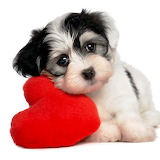 ☺I Give You My Heart! :)