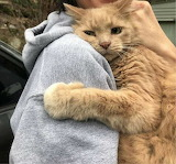 Cat hugging his hooman after being lost for 5 hours