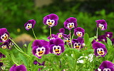 Flors Divertides - Funny Flowers
