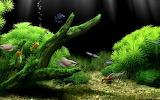 Fish-Tank-Background-Pictures-Amazing-Aquarium-1024x640