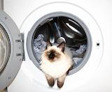 Washing-machine with cat