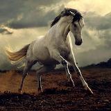 Wild Horses (12)
