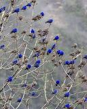 ^ Birds