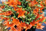 ^ Daylilies