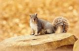Animals-squirrel-cute
