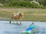 Capn dans mermaid tours with Whisper