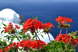 red flowers and Aegean blue