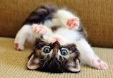 #Adorable Kitty