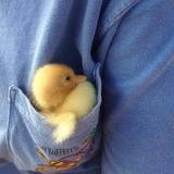 A Pocket full of Ducky